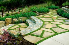 Dicondra is the variety  of grass is between the stones. This type of project is also the perfect fit for EasyTurf - you'll get the same look and feel of grass without any of the maintenance.  You could also us a creeping thyme or corsican mint.