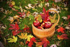 """Apple Picking Time"" by Kristina Austin Scarcelli"