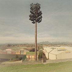 Cellphone Towers Disguised as Trees Are a Puzzling Attempt at Aesthetics | Raw File | Wired.com