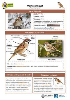 Bird Identification, Arabesque, Have Fun, National Parks, Animation, Illustration, Animals, Image, Garden