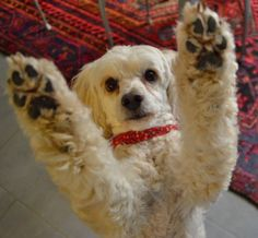 Give me five #yummypets #dog
