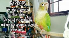 parrots. ~ Photo repinned 4 U by Karen of AZdesertTrips.com