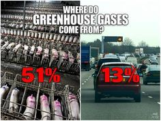 """According to the Worldwatch Institute, 51% or more of ALL GREENHOUSE GASES are from raising animals for food. Only 13% comes from cars."