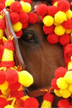 Hay quien lo llama fotografía: Mirada de caballo jerezano engalanado para la fies...