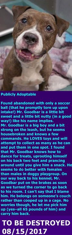 SAFE 08/15/17 --- Brooklyn Center My name is MR. GOODBAR. My Animal ID # is A1120771. I am a male br brindle and white staffordshire mix. The shelter thinks I am about 2 YEARS I came in the shelter as a STRAY on 08/03/2017 from NY 11231, owner surrender reason stated was STRAY. http://nycdogs.urgentpodr.org/mr-goodbar-a1120771/
