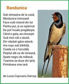 Bird, Spring, Education, School, Birds, Onderwijs, Learning