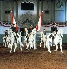 Spanische Reitschule. Vorführung in der Winterreitschule.