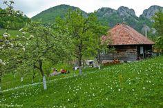 Nature Animals, Daffodils, Nature Photos, Mother Earth, Romania, Australia, Mountains, Places, Instagram Posts