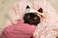 An Amazing Newborn Kitten Photo Shoot - I Can Has Cheezburger? - Funny Cats   Funny Pictures   Funny Cat Memes   GIF   Cat GIFs   Dogs   Animal Captions   LOLcats   Have Fun   Funny Memes
