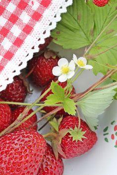 Strawberries   from VIBEKE
