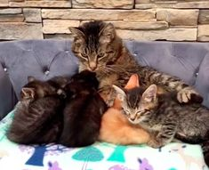 Grandpa Cat Waited Months to Cuddle Kittens, Has His Dream Come True - Love Meow