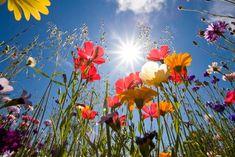 I fiori visti dal basso