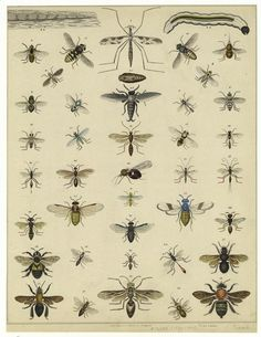 flies and #bees #NYPL #printable art