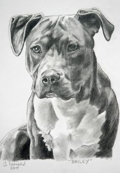 Animal drawings, sketches of dogs, pencil drawings, art drawings, sta Animal Sketches, Animal Drawings, Drawing Sketches, Art Drawings, Pencil Drawings, Amazing Drawings, Beautiful Drawings, Pitbull Drawing, Desenho Tattoo