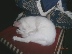 Sleeping in my chair.