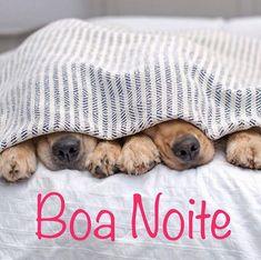❤❤❤  #boanoite #amoanimais