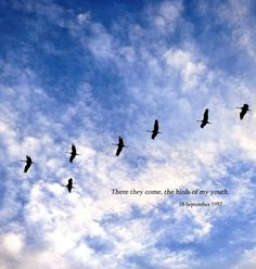 """""""There they come now, the birds of my youth."""" - Jean Sibelius, 1957 - The Dust of Hue"""