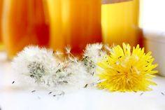 sirop de papadie miere de papadie Dandelion, Flowers, Plants, Home, Syrup, Canning, Dandelions, Plant, Taraxacum Officinale