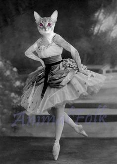 Is there anything more elegant and graceful than a cat?    Perhaps a ballerina cat?    Professionally printed on archival Kodak premier paper.