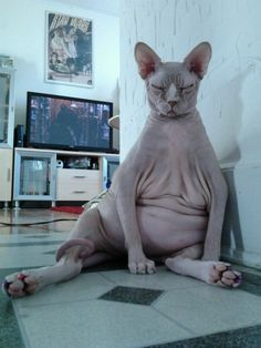 if i had a hairless cat... i would hope it would be like this one.