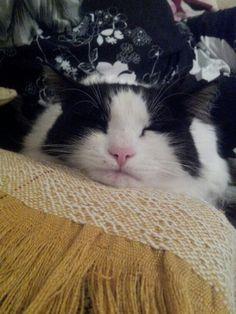 Sasouki my beautiful cat relaxing