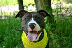 Staten Island Center   SHELLY -A1002246  FEMALE, BLACK / WHITE, PIT BULL MIX, 2 yrs STRAY - EVALUATE, NO HOLD Reason STRAY  Intake condition NONE Intake Date 06/06/2014, From NY 10301, DueOut Date 06/09/2014, Medical Behavior Evaluation GREEN  https://www.facebook.com/photo.php?fbid=816592298353651set=a.617941078218775.1073741869.152876678058553type=3theater