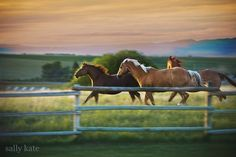 This is a horse heaven,wonderland anything this is mostly a horse sanctuary actully it probably is more of a horse place than Texas. by- Dresden Harrington