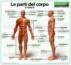 Le parti del corpo in italiano - Parts of the body in Italian