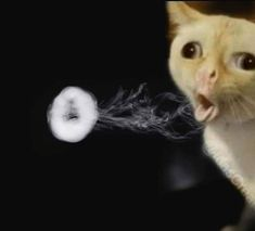 we get it you vape - funny cat pics & videos Funny Cats, Funny Animals, Cute Animals, Stupid Memes, Funny Memes, Hilarious, Vape Memes, Cool Pictures, Funny Pictures