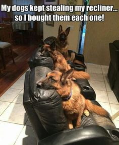 So I guess I should be happy I only have one German shepherd that has taken over the recliner.....<<<Yeah!