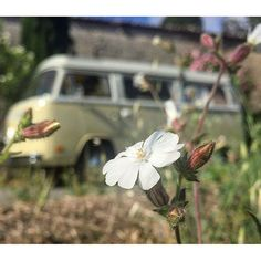 Liked on InstaGram: Blooming Provence, mid summer.... Come and see  #69campers #explore #camping #Provence #frenchriviera #france #aircooled #vwcamper #holiday #vacation #usa #germany #gooutside #ourcamplife #holland  #BestVacations #friends #love #vacances #vwbus #campingcar #neverstopexploring #dreamvacation #luxeryworldtraveler #summer #WeLiveToExplore #backcountry #escapetoearth #bulli