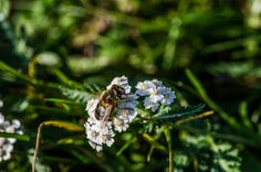 Biene | Flickr - Fotosharing! Photography Photos, Photos, Bees