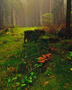 "bluepueblo:  "" Mushroom Forest, Norway  photo via giants  """