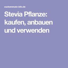 Stevia Pflanze: kaufen, anbauen und verwenden