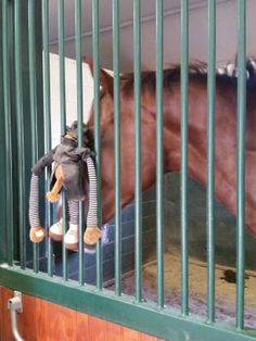 Stall rest secrets - help your horse stay busy and quiet with these tips!  http://www.proequinegrooms.com/index.php/tips/grooming/stall-rest-secrets/
