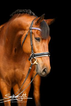 HORSE PHOTOGRAPHY BY FRIEDERIKE SCHEYTT