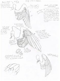 How to draw ... wings