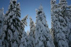 Tief verschneiter Wald - Kappl Snow, Outdoor, Paisajes, Mountains, Hiking, Woodland Forest, Outdoors, Outdoor Games, Outdoor Living