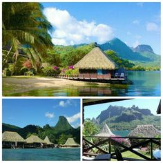 What you say, another Surge365 Membership Spectacular Exclusive, yes indeed!  French Polynesia!  Oct. 28th-Nov.4th...studio that sleeps 2... $162! Not per person or per night! For the entire week!  Member pricing only..Don't have a Surge Membership? Why not? Text me 347-985-3293 or inbox me today. #Surge365 #TravelMembership #NoMoreFullPrice