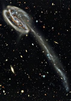 The #TadpoleGalaxy (also known as UGC 10214 or Arp 188) is a disrupted barred spiral galaxy located about 420 million light-years away toward the northern constellation Draco. Its most dramatic features are an incredibly long trail of stars and massive, bright blue star clusters, reflecting the essence of our dynamic, restless and violent Universe. - Credit: NASA, Hubble, Mehdi Bozzo-Rey
