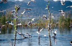 One of the elements that make Skadar Lake so unique and well know in the world is its flora and fauna, which is it wealth of the plant and animal world....