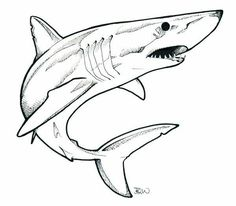 shark easy drawing drawings sharks draw simple cartoon pencil sketches
