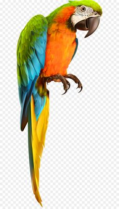 678 X 1178 1 Transparent Background Parrot ~ Fire Vector ~ Get Transparent PNG Clipart Images For Design ~ High Def PNG Wallpaper
