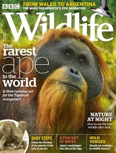 Buy Digital and Print Copies of BBC Wildlife Magazine - May Available on Desktop PC or Mac and iOS or Android mobile devices. Animal Magazines, Men's Magazines, Magazine Cover Design, Magazine Covers, Award Winning Photography, Latest Discoveries, Male Magazine, Closer To Nature, Stunning Photography