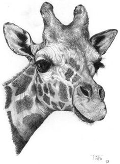 Resultado de imagem para drawing pencil giraffe