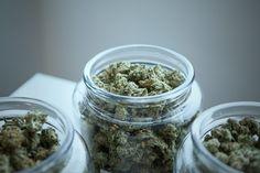 Cannabis Cures Cancer, Cannabis Vape, Cannabis Plant, Medical Marijuana, Cannabis News, Growing Marijuana Indoor, Cannabis Growing, Cannabis Seeds For Sale, Crunches