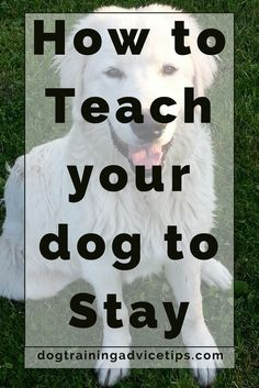 How to Train your dog to Stay | Dog Training Tips | Dog Obedience Training | Dog Training Commands | http://www.dogtrainingadvicetips.com/teach-dog-stay