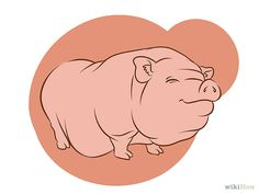 Have a Pot Bellied Pig for a Pet Step Pig Information, Pot Belly Pigs, Pet Steps, Pets, Animals, Animales, Animaux, Animal, Animais