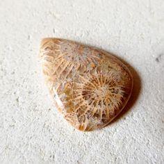 フォッシル・コーラル ひまわり 31mm/ 化石珊瑚・ルース - 天然石・パワーストーンのルース、ペンダント、アクセサリー、鉱物 Stone marble