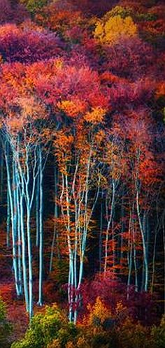 AUTUMN tree -- via: Kristijan Jesenovic -- 500px